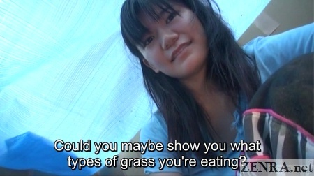 talking about eating grass in japan